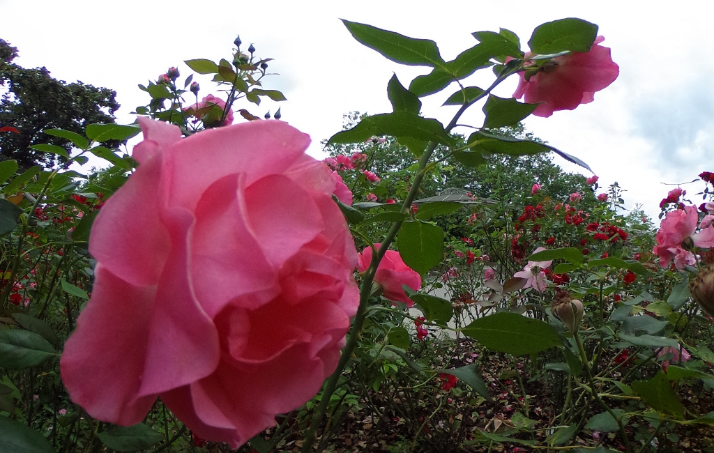 Inter rozoj