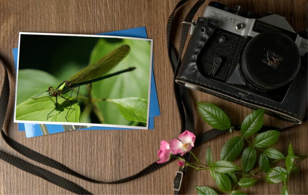 Insekto